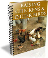 Raising Chickens & Other Birds